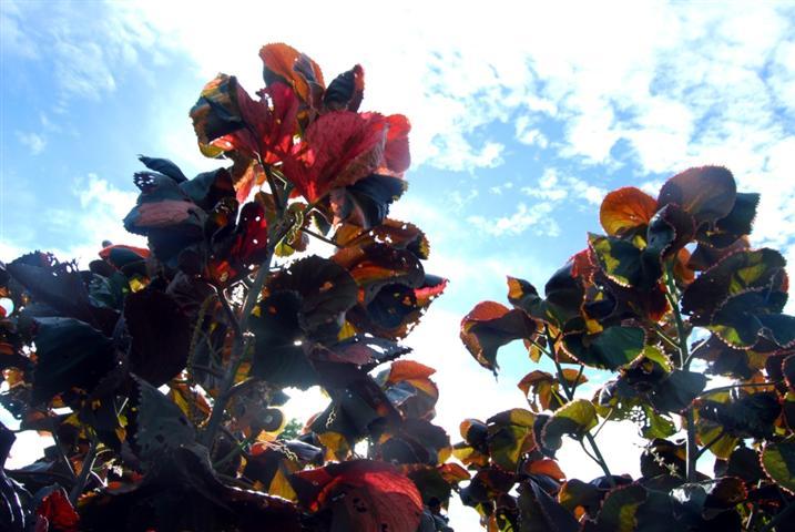 flowersky.copyright.lusiana